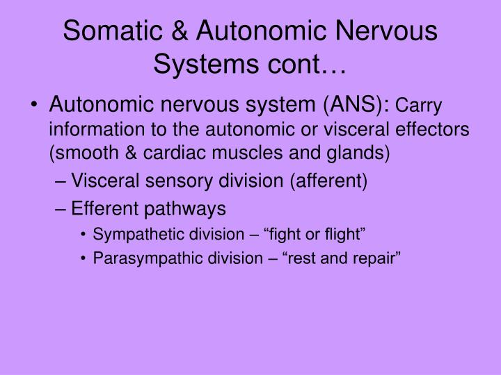 Somatic & Autonomic Nervous Systems cont…