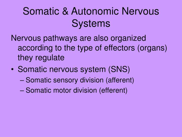 Somatic & Autonomic Nervous Systems