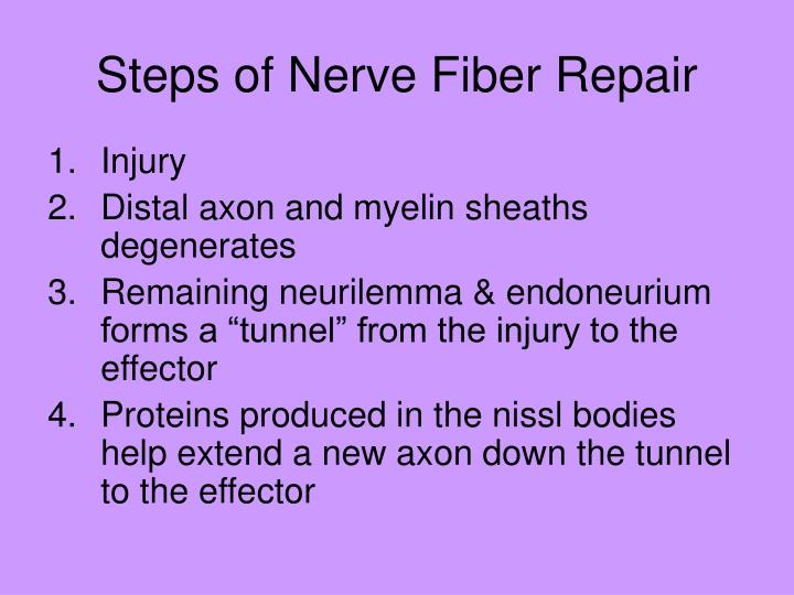 Steps of Nerve Fiber Repair