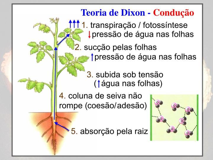 Teoria de Dixon -