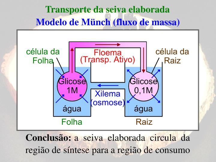 Transporte da seiva elaborada