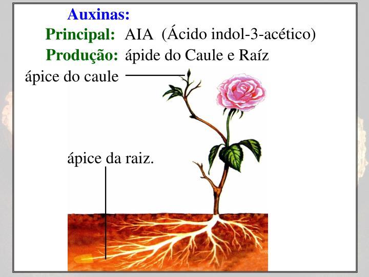 Auxinas: