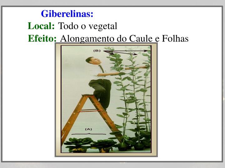 Giberelinas: