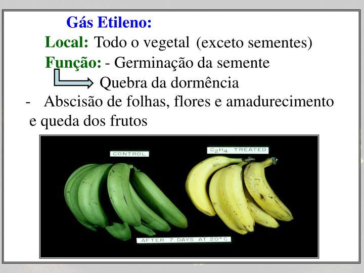 Gás Etileno: