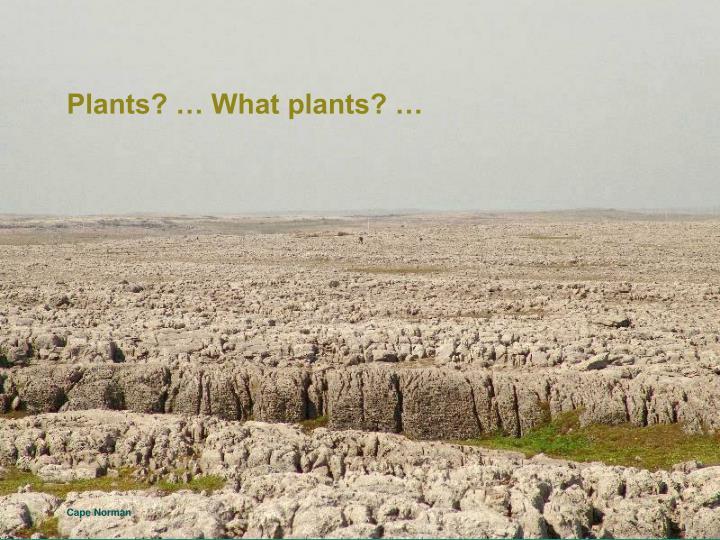 Plants? … What plants? …