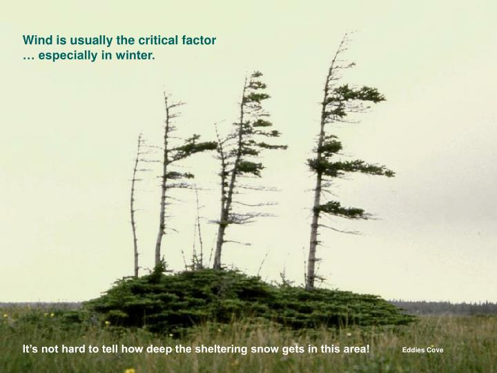 Wind is usually the critical factor … especially in winter.