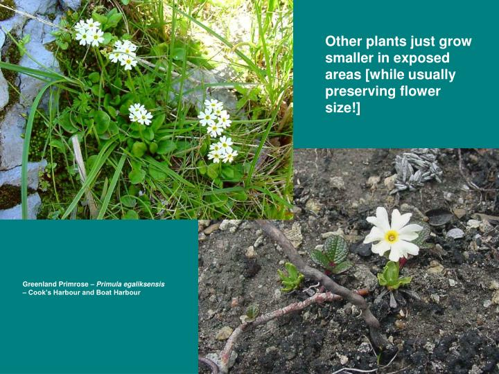 Other plants just grow smaller in exposed areas [while usually preserving flower size!]