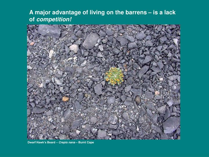 A major advantage of living on the barrens – is a lack of