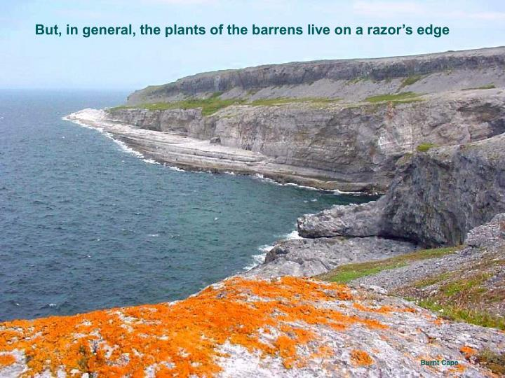 But, in general, the plants of the barrens live on a razor's edge