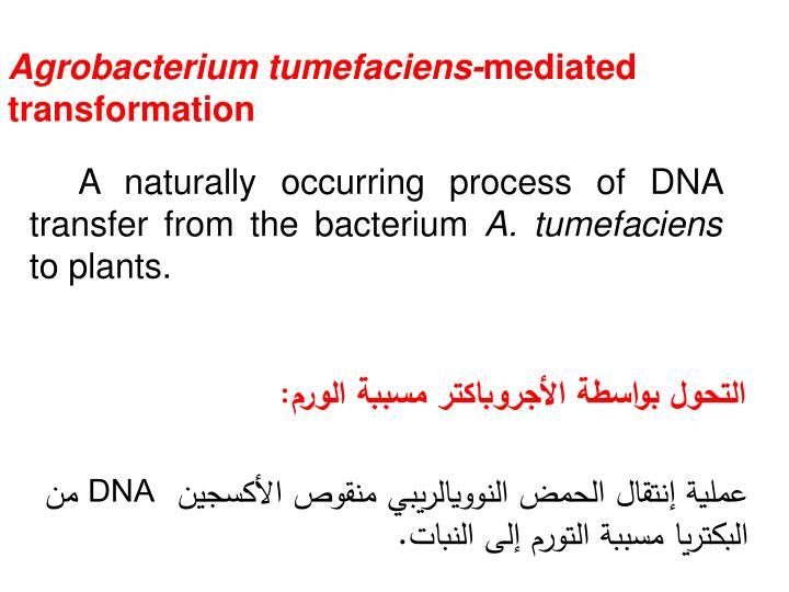 Agrobacterium tumefaciens-