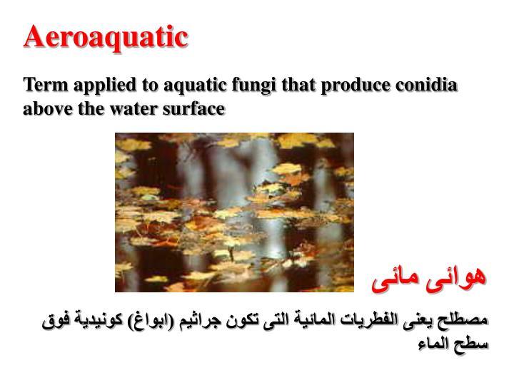 Aeroaquatic