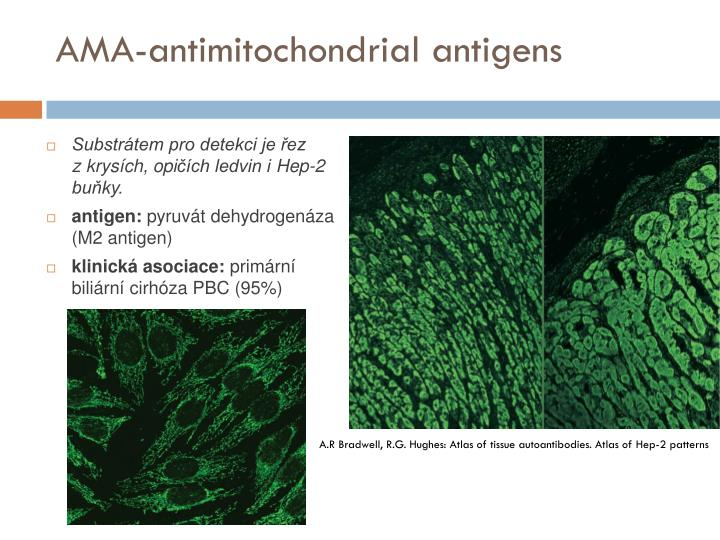 AMA-antimitochondrial antigens
