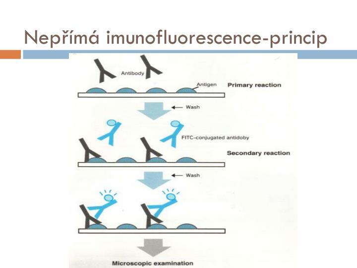 Nepřímá imunofluorescence-princip