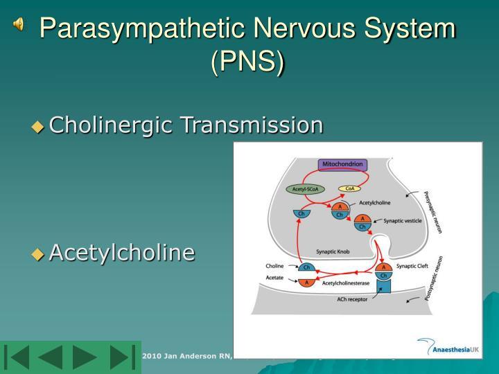 non adrenergic non cholinergic transmission pdf