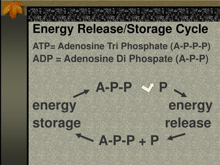 Energy Release/Storage Cycle