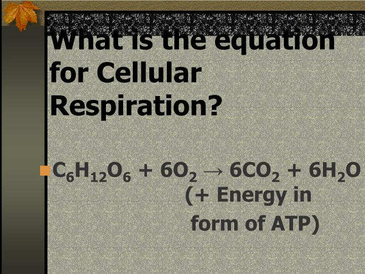 What is the equation for Cellular Respiration?