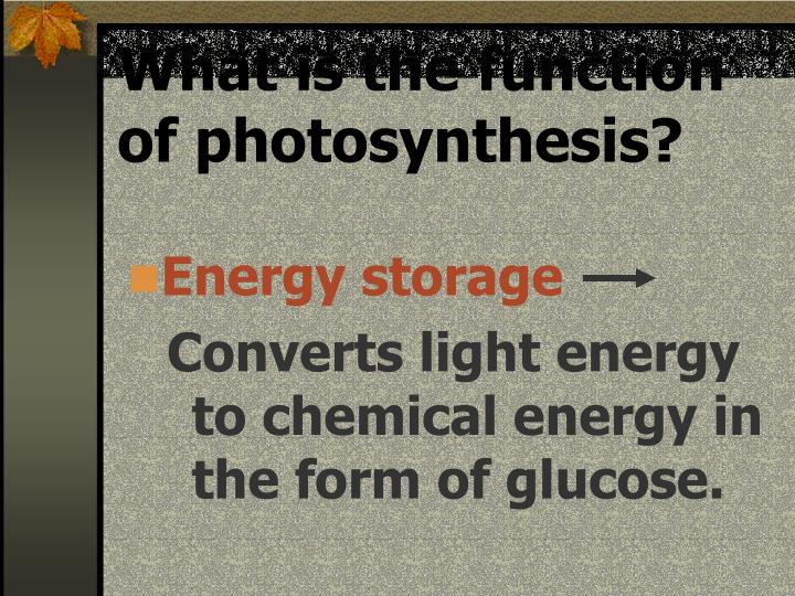 What is the function of photosynthesis?