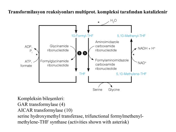 Transformilasyon reaksiyonları multiprot. kompleksi tarafından katalizlenir
