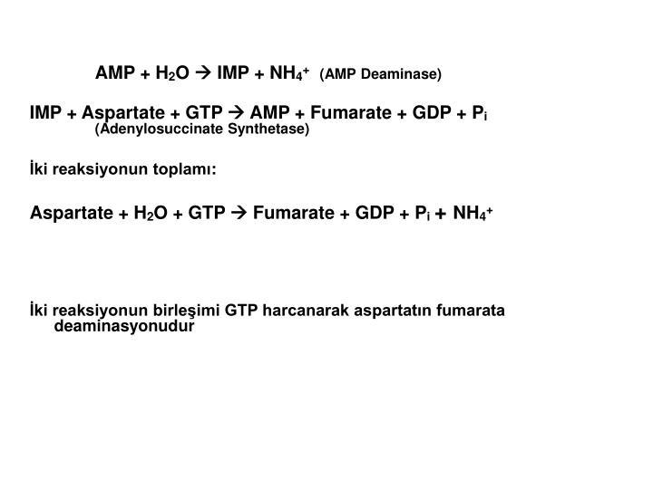 AMP + H