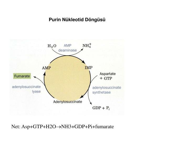 Purin Nükleotid Döngüsü