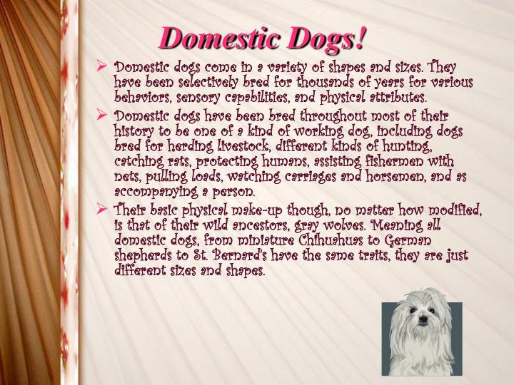 Domestic Dogs!