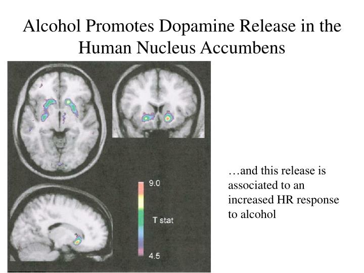 Alcohol Promotes Dopamine Release in the Human Nucleus Accumbens