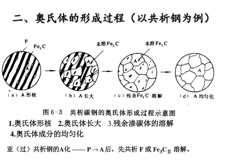 二、奥氏体的形成过程(以共析钢为例)