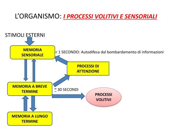 L'ORGANISMO: