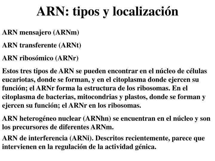 ARN mensajero (ARNm)