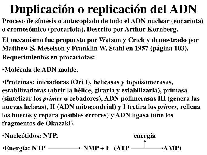 Proceso de síntesis o autocopiado de todo el ADN nuclear (eucariota) o cromosómico (procariota). Descrito por Arthur Kornberg.