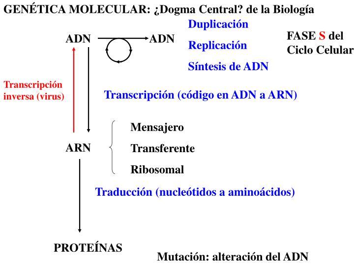 GENÉTICA MOLECULAR: ¿Dogma Central? de la Biología