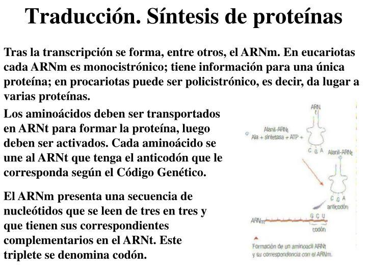 Tras la transcripción se forma, entre otros, el ARNm. En eucariotas cada ARNm es monocistrónico; tiene información para una única proteína; en procariotas puede ser policistrónico, es decir, da lugar a varias proteínas.