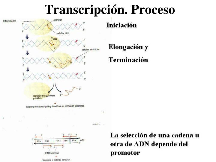 Transcripción. Proceso