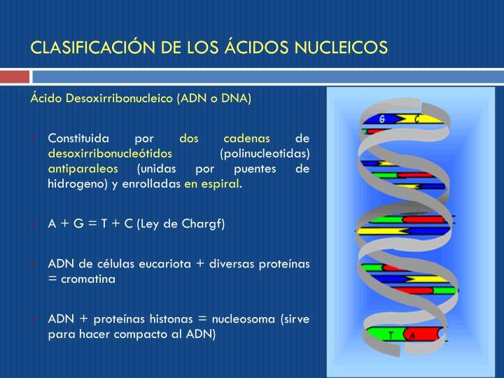 CLASIFICACIÓN DE LOS ÁCIDOS NUCLEICOS