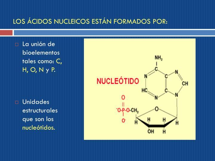 LOS ÁCIDOS NUCLEICOS ESTÁN FORMADOS POR: