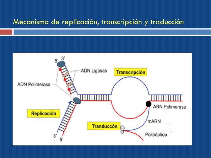 Mecanismo de replicación, transcripción y traducción