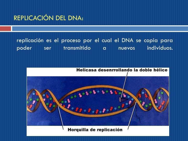 REPLICACIÓN DEL DNA:
