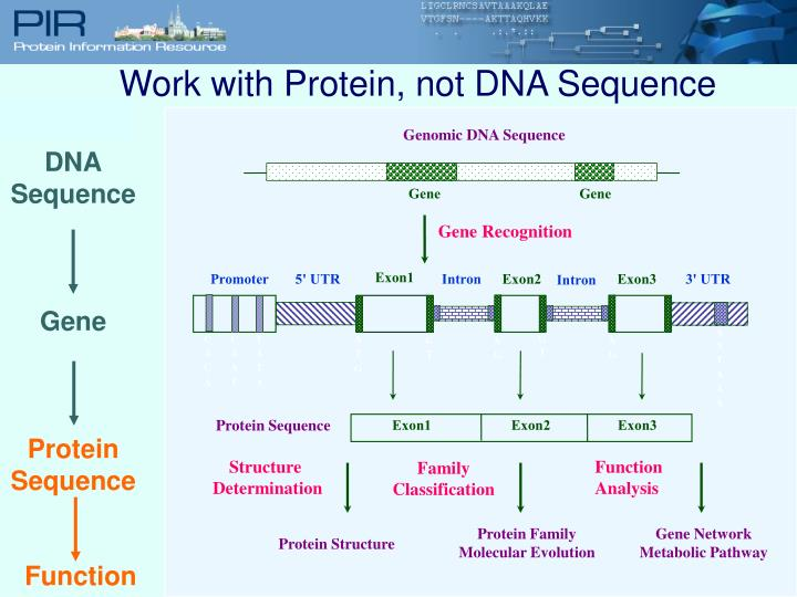 Genomic DNA Sequence