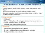what to do with a new protein sequence