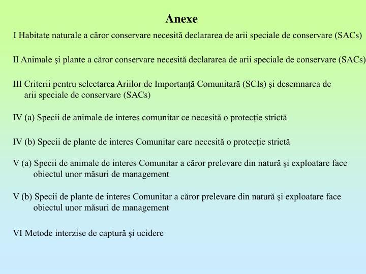 Anexe