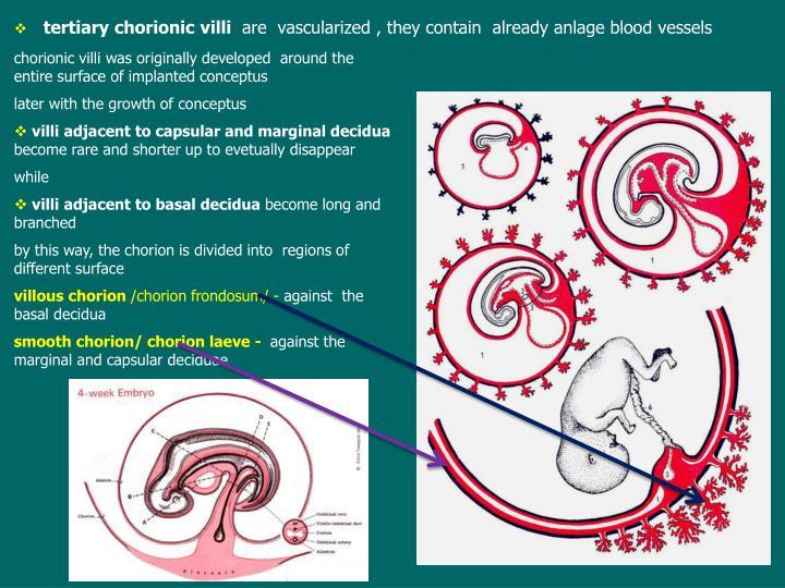 chorionic villi was originally