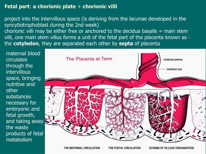 Fetal part