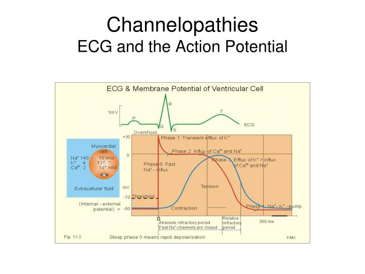 Channelopathies ecg and the action potential