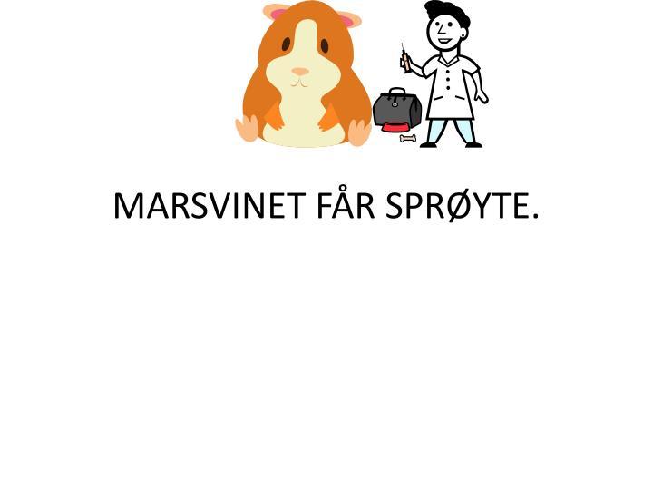 MARSVINET FÅR SPRØYTE.