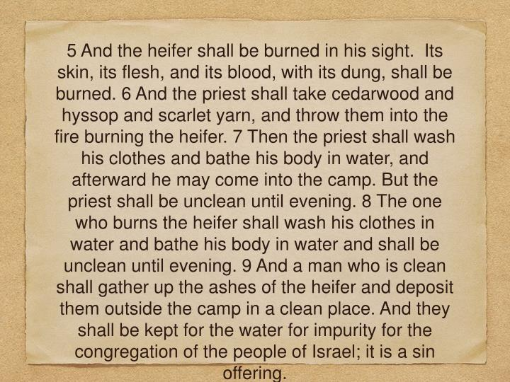 5 And the heifer shall be burned in his sight.  Its skin, its flesh, and its blood, with its dung, shall be burned. 6 And the priest shall take cedarwood and hyssop and scarlet yarn, and throw them into the fire burning the heifer. 7 Then the priest shall wash his clothes and bathe his body in water, and afterward he may come into the camp. But the priest shall be unclean until evening. 8 The one who burns the heifer shall wash his clothes in water and bathe his body in water and shall be unclean until evening. 9 And a man who is clean shall gather up the ashes of the heifer and deposit them outside the camp in a clean place. And they shall be kept for the water for impurity for the congregation of the people of Israel; it is a sin offering.
