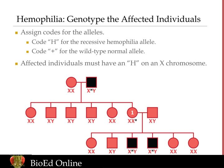 Hemophilia: Genotype the Affected Individuals