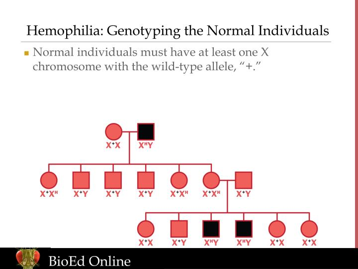 Hemophilia: Genotyping the Normal Individuals