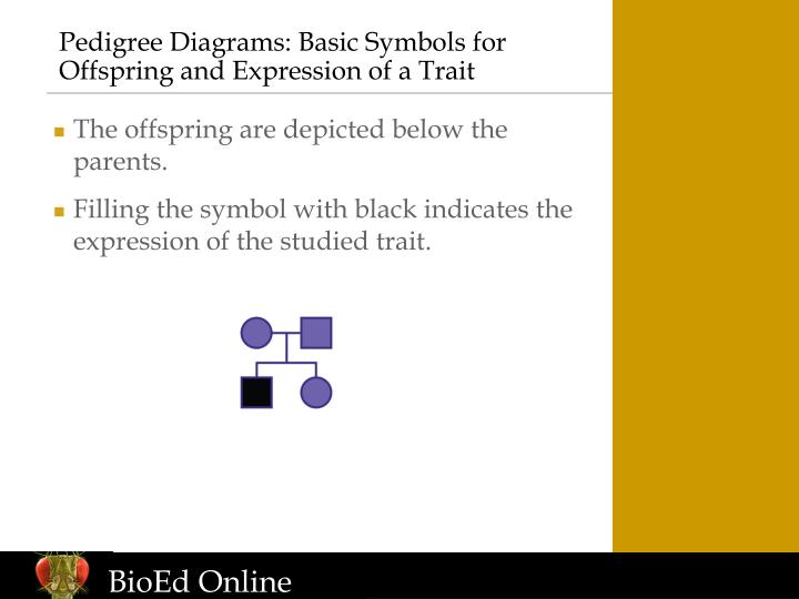 Pedigree Diagrams: Basic Symbols for