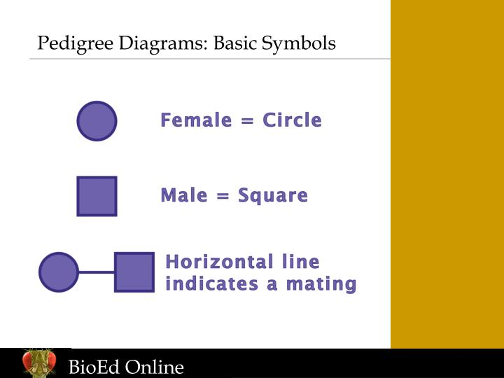 Pedigree diagrams basic symbols