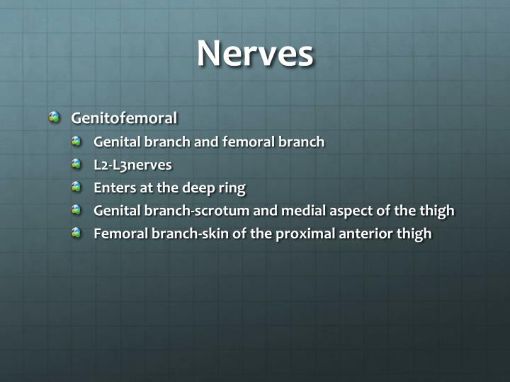 Ppt Surgical Management Of The Inguinal Hernia
